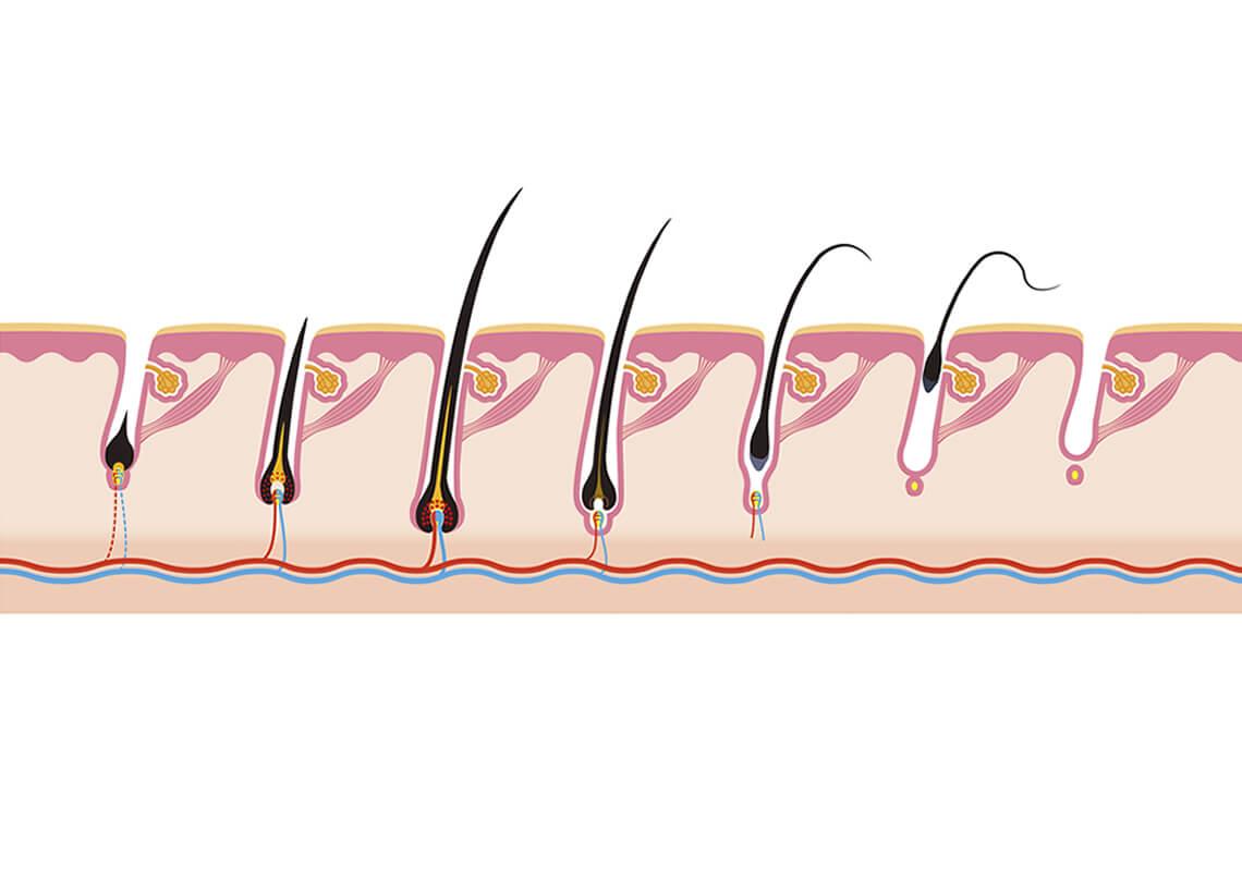 Gesunde Haarwurzeln Als Ursprung F 252 R Volles Haar Super